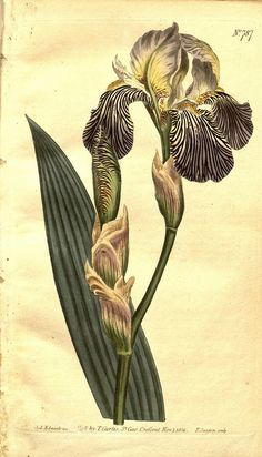 n3_w1150 by BioDivLibrary, via Flickr