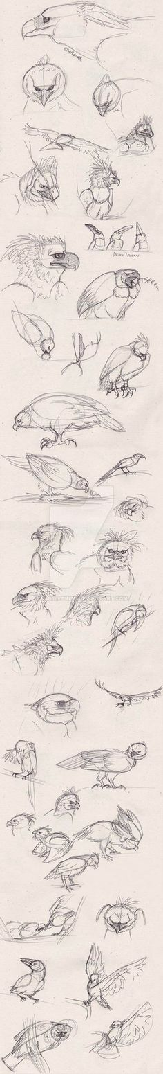 Jungle Eagle Sketches by babbletrish on DeviantArt