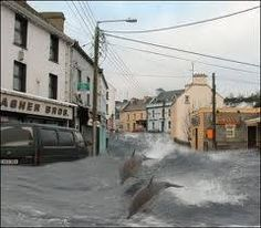 Dolphins, storm 2014, Ireland