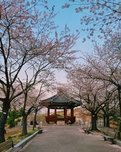 Posted on Twitter by @Viki:Spring is making its statement in #OlympicPark, #Seoul. #Korea  Photo cred: njelllsj