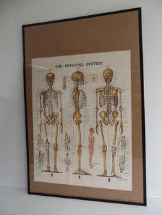 Vintage SKeletal Anatomical Chart 1940's