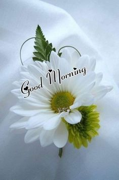 New HD Collection Free Good Morning Pics , Good Morning Wallpaper , Good Morning Photo Pics Pictures Free Download & Share . Good Morning Flowers Gif, Good Morning Greetings, Good Morning Good Night, Evening Greetings, Beautiful Morning Pictures, Good Morning Picture, Morning Pics, Morning Dua, Morning Status