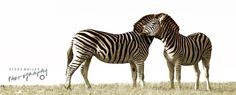 Zebra Art  by SteveBailey