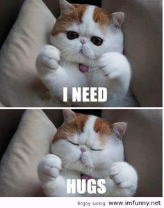 I need hugs.. roger cat strikes again!