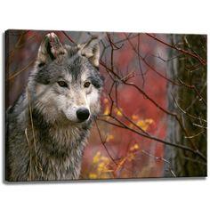 Wolf Motiv auf Leinwand im Format: 80x60 cm. Hochwertiger Kunstdruck als Wandbild. Billiger als ein Ölbild! ACHTUNG KEIN Poster oder Plakat!: Amazon.de: Küche & Haushalt