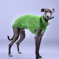 Greyhound sweater