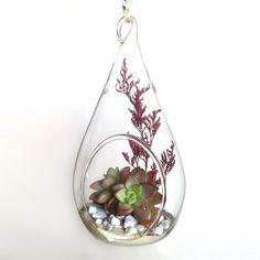 Hanging Terrarium Succulent Pendant