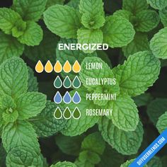 Energized - Essential Oil Diffuser Blend