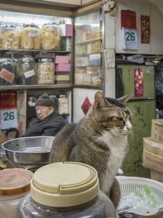 When Dutch visual artist and photographer Marcel Heijnen moved to Hong Kong, he was immediately drawn to the fascinating culture of shop cats, and decided to capture the little feline emperors amongst...
