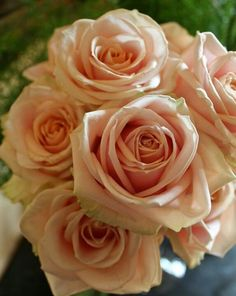 Pearl pale pink Avalanche roses to go with pink and white ranuculus and ivory english roses for the bridal bouquet. based on Joseph's proposed bouquet