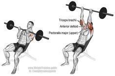 Dumbbell Hammer Curl Exercise Guide And Video Biceps