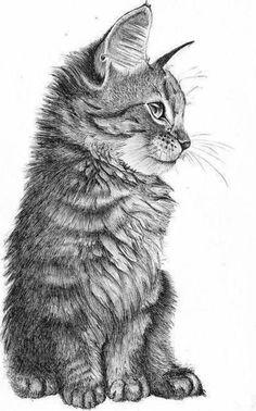 ▷ 1001 + Ideas for DIY Art - Learn to Draw with Pencil .- ▷ 1001 + Ideen für DIY-Kunst – mit Bleistift zeichnen lernen ▷ DIY Art Ideas – Learning to draw with a pencil draw. Easy Pencil Drawings, Landscape Pencil Drawings, Easy Drawings Sketches, Animal Sketches, Animal Drawings, Drawing Animals, Drawings Of Cats, Drawing Ideas, Cute Drawings