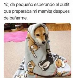 Animal Jokes, Funny Animals, Cute Animals, Funny Quotes, Funny Memes, Hilarious, Funny Spanish Memes, Spanish Jokes, Northwestern University