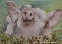 Petit cochon - Animaux diverse