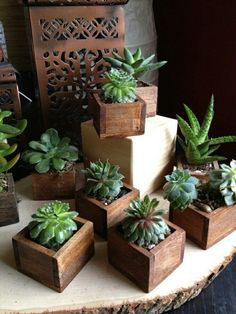 56 Incredibly Amazing DIY Succulents Project Ideas The benefit of succulents is they can be indoors OR outdoor plants. They go beyond hens and chicks there are many types of succulents. Types Of Succulents, Cacti And Succulents, Planting Succulents, Planting Flowers, Outdoor Plants, Air Plants, Garden Plants, House Plants, Indoor Garden