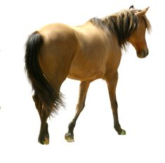vasiliska67 — «dun_horse_precut_by_five_colours-d3f0uot.png» на Яндекс.Фотках