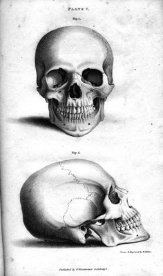 Plate Vb Human Skull, engraving by William Miller after drawing by W. Miller, published in Engravings of the Skeleton of the Human Body. John Gordon MD. Blackwood, Edinburgh 1818. #anatomy #illustration #science