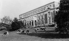 "Cows grazed in front of Comer Hall, probably in 1924. The inside of the building was only two years old that year, having been replaced after a fire gutted Comer in 1920. Nobody knew for sure what started the fire that early Sunday morning in October. Nearly sixty years later graduate Lyle Brown theorized that a still being used to make distilled water in an overnight lab experiment had been the cause. ""In those days,"" he said, ""it wasn't uncommon for the town water to be cut off. When that happened, of course, the still kept running and got so hot that it melted down and set the building afire."" Volunteers promptly laid a hose from town, but Phil Hardie, Cliff Hare?s son-in-law, recalled that the water hose wasn't long enough to reach the fire. The rebuilt Comer looks much the same today, but the cow pasture lies mostly beneath an asphalt parking lot."