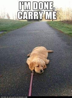 Haha, this reminds me of my dog the first time we took him to the park