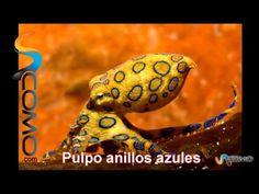 ▶ Los 10 animales más venenosos del mundo, en español. The 10 most poisonous animals