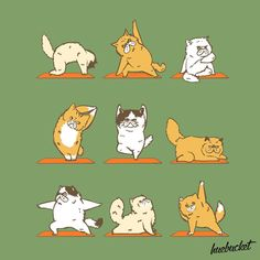 Persian Cat Persian Cat Yoga (by - Funny Cat Memes, Funny Cat Videos, Crazy Cat Lady, Crazy Cats, Animal Yoga, Yoga Illustration, Cat Illustrations, Funny Cats And Dogs, Cat Drawing