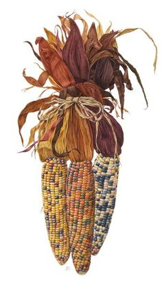 Rocky Mountain Society of Botanical Artists: September 2013