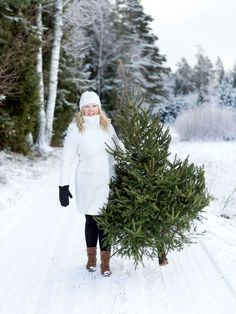 Bringing home the Christmas tree