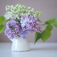 Lilac | Home Guests
