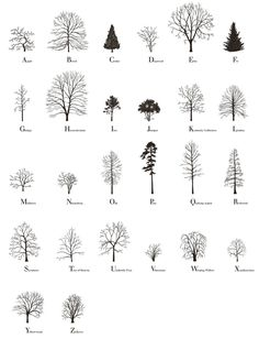 The Tree Alphabet was made by Katie Holten and was used in her book, About Trees (Amazon), which features writing from Jorge Lui