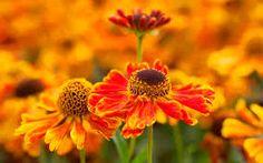 Image result for autumn perennials uk