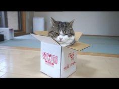 Descubre un gran misterio de la naturaleza ¿Por qué los gatos aman tanto las cajas? | Upsocl Verde