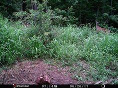 #stealthcam #trophyrock #trailcam #scouting #whitetail #whitetails #deerhunting #deer #hunt #hunting #hunter #deerhunt #whitetaildeer http://misstagram.com/ipost/1554824437396586382/?code=BWT2JaHHr-O