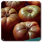 Organic Cherokee Purple Tomato HEIRLOOM Brownish-purple skin with green shoulders and red flesh. The most popular of the black tomatoes for its outstanding flavor and texture. Large beefsteak fruits weigh in at 12-16 oz. Widely grown by gardeners and market growers alike. A popular heirloom for the greenhouse. Believed to trace back over 100 years to the Cherokee Indians. Indeterminate (Lycopersicon esculentum) Days to maturity: 72 days