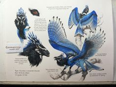 "Aaaaand! The potential final version of this guy! I know it seems like spamming, but this is the only way I currently have of sharing with the commissioner. (Internet still out!) Custom Aequis designs are open! Caran d'Ache supracolor (watercolor) colored pencils, Derwent colored pencils, Winsor and Newton watercolors, bits of W&N gouache on Arches hot press 140 lb paper, approx 11x14""."
