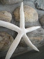 Starfish and river rock