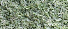 Frischer grüner Reis