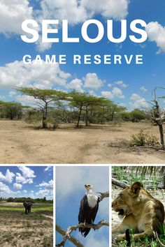 One of the less known safaris in Tanzania, but one you should most definitely learn more about and visit: Selous Game Reserve