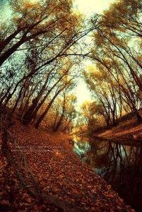 Táncot jár a fák közt/ Ősz Tündér./ Egy ütemre zizzen/ ezernyi levél./ Napfény villan át/ ...folytatás a linken.