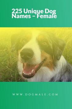 225 Unique Dog Names – Female War Dogs, Dog List, Dog Names, Puppies, Female, Pets, Funny, Unique, Animals