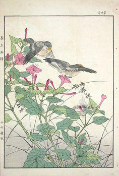 Imao Keinen (1845 - 1924): Kikuitadaki - Fall. Single Woodblock Prints 1891.