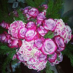 Deep purple roses and candy cane hydrangea