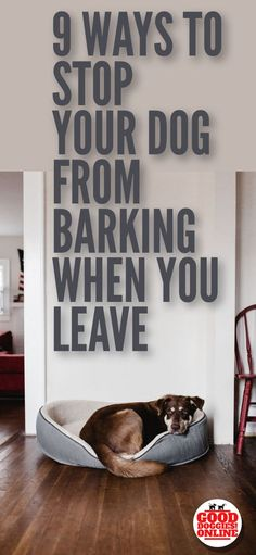 If you need to stop your dog barking when you leave the house, check out these stop barking dog training tips. #dogs #dogtraining #barking