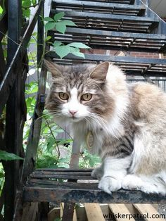 Super fluffy fire escape cat Fire Escape, Outdoor Cats, Mystery Series, Paths, Kitty, Cute, Animals, Little Kitty, Animales