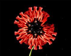 Las flores humanas de Cecelia Webber