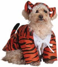 Pet Raja The Tiger Dog Costume For Large Dogs by Disguise >>> Continue to the product at the image link. (This is an Amazon affiliate link)