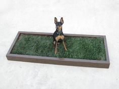 Indoor Dog Potty and Dog Potty Grass delivery for dog litter boxes and the dog potty patch in Los Angeles and Orange County Indoor Dog Potty, Porch Potty, Dog Litter Box, Real Dog, Animal Projects, Little Dogs, Dog Love, Cute Dogs, Dogs And Puppies