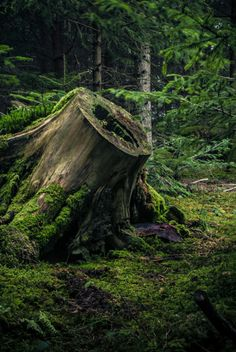 New Nature Photography Landscape Trees Magical Forest 58 Ideas Magical Forest, Tree Forest, Dark Forest, Beautiful World, Beautiful Places, Beautiful Forest, Simply Beautiful, Forest Floor, Walk In The Woods