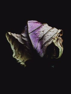 Decaying #Flowers by Billy Kidd - #BillyKidd