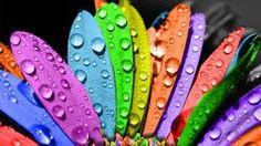 Coloruful days