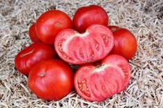 Rajskoe Naslazhdenie - Nasiona - PomidorowaDolina.pl Wyjątkowe walory smakowe